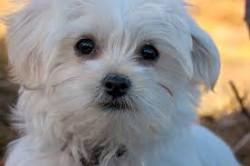 Separazione tra coniugi o conviventi: a chi va affidato il cane della coppia?