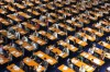 Regolamento che disciplina i corsi di formazione per l'accesso alla professione di avvocato